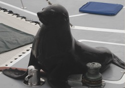 nam-seal