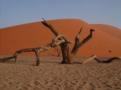 nam-tree
